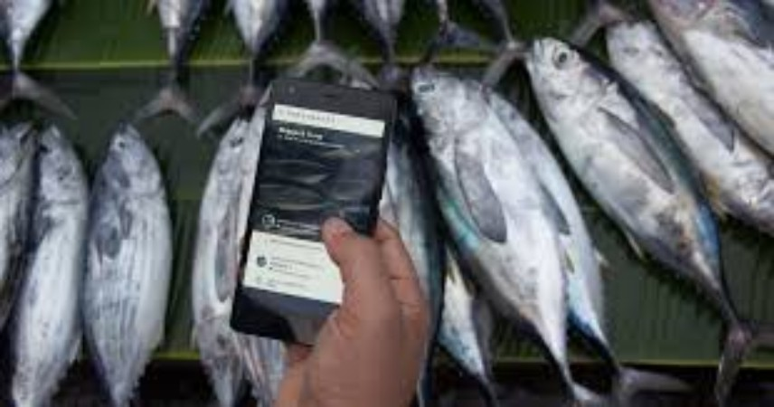 Traceability Problems Existing In The Seafood Industry To Be Solved Through Blockchain By This Startup